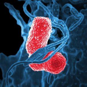 bacterial disease sample illustration cmc